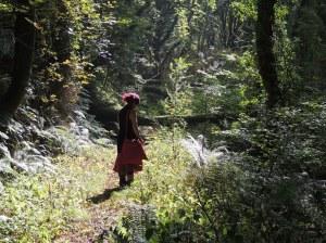 me woods2_t